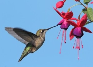 Hummingbird Marketing Services Pricing: Fuschia