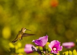 Hummingbird Marketing Services Pricing: Hollyhock